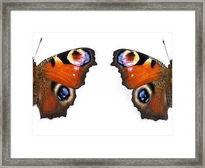 Peacock Butterfly Wings Framed Print by Tim Gainey