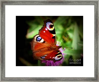 Peacock Butterfly Framed Print by Yvonne Johnstone