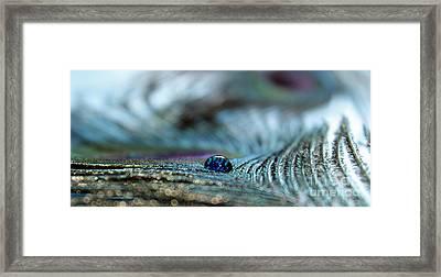 Peacock Delight Framed Print by Krissy Katsimbras