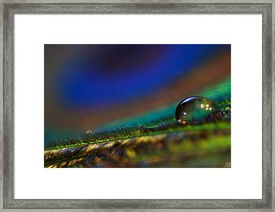 Peacock Drop Framed Print by Lisa Knechtel