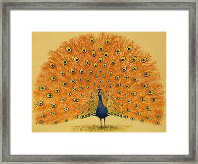 Peacock Framed Print by English School