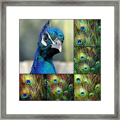 Peacock Eye Framed Print by Girish J