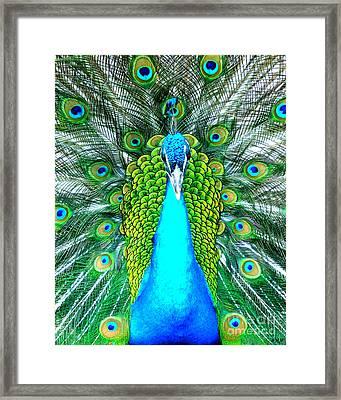Peacock Face On Framed Print