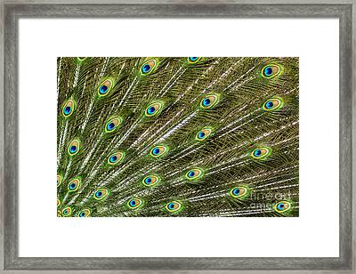 Peacock Feather Abstract Pattern Framed Print by Darleen Stry