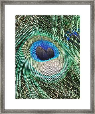 Peacock Feather Framed Print by Eric  Schiabor