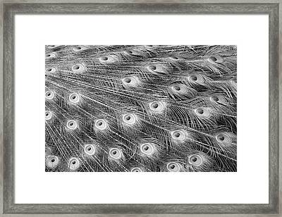 Framed Print featuring the photograph Peacock Feather Fiesta - Black And White by Diane Alexander