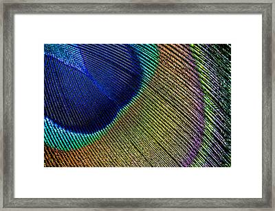 Peacock Feather Macro Framed Print by Adam Romanowicz
