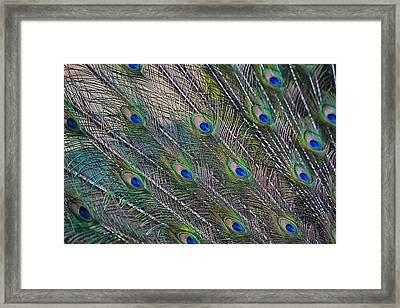 Peacock Feathers Abstract Framed Print by Eti Reid