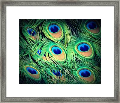 Peacock Feathers Framed Print by David Mckinney