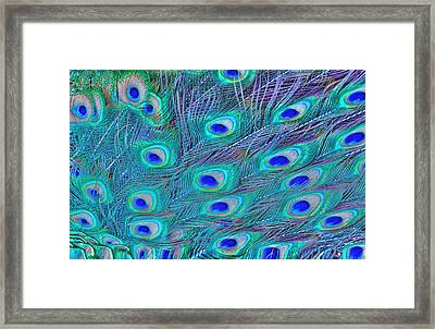 Peacock Feathers Framed Print by Ram Vasudev