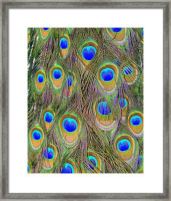 Framed Print featuring the photograph Peacock Feathers by Ramona Johnston