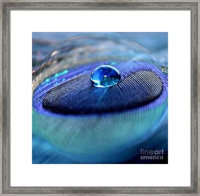Peacock Globe Framed Print