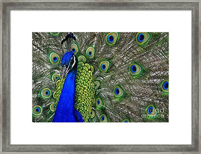 Peacock Head Framed Print by Debby Pueschel