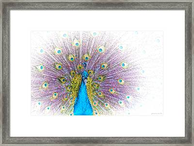 Framed Print featuring the photograph Peacock by Holly Kempe