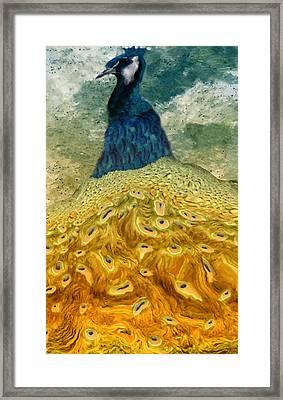 Peacock Framed Print by Jack Zulli