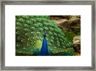 Peacock Framed Print by James Barber