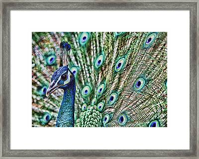 Peacock Framed Print by Karen Walzer