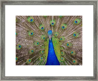 Framed Print featuring the photograph Peacock by Leigh Anne Meeks