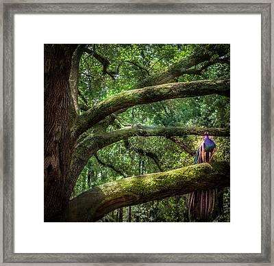 Peacock Oaks Framed Print