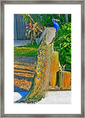 Framed Print featuring the photograph Peacock On The Stump by Joan McArthur
