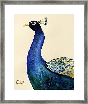 Peacock Portait Framed Print by Prashant Shah