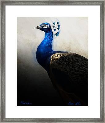 Peacock Portrait Framed Print