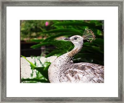 Peacock Portrait Framed Print by Ella Kaye Dickey