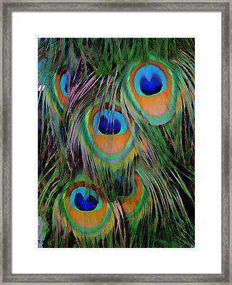 Peacock Pride Framed Print by Anne Sterling