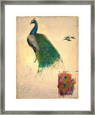Peacock Study 1896 Framed Print by Padre Art