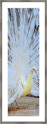 Peacock Transformation Framed Print