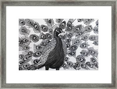 Peacock Walk Framed Print