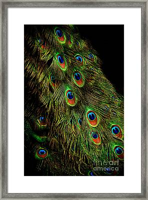 Peacock Waterfall Framed Print by Venetta Archer
