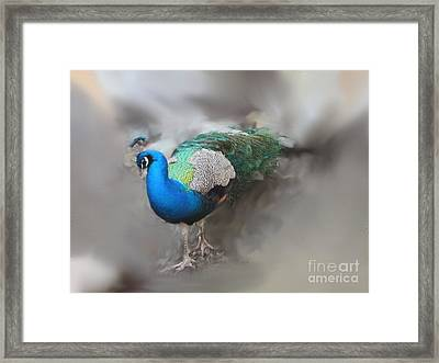 Peacock2 Framed Print