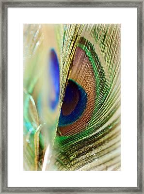 Peacocks Dance The Samba Framed Print by Lisa Knechtel