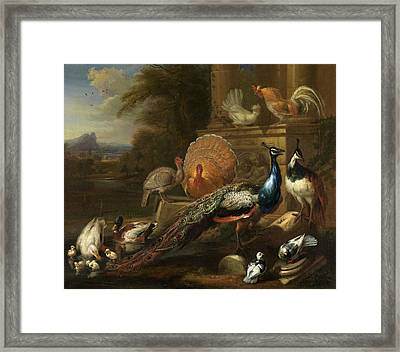 Peacocks, Doves, Turkeys, Chickens And Ducks By A Classical Framed Print