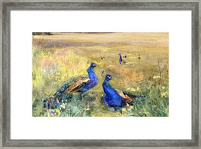 Peacocks In A Field Framed Print