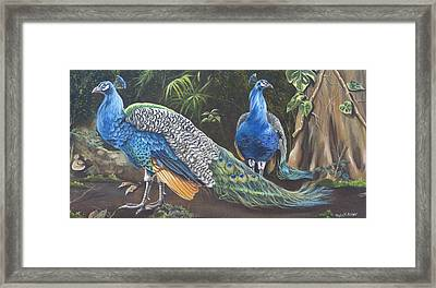 Peacocks In The Garden Framed Print by Phyllis Beiser