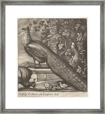 Peacocks, Jan Griffier I, John Oliver Framed Print