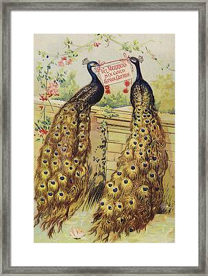 Peacocks Sitting On Wall Framed Print by American School