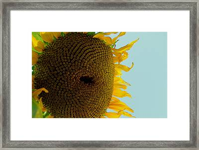 Peak A Boo Sunflower Framed Print