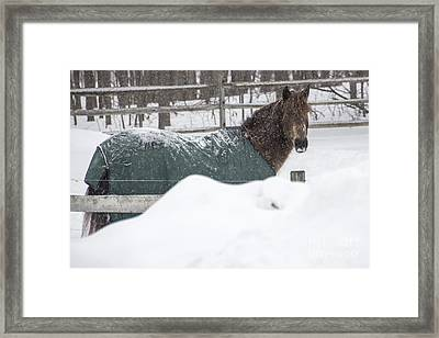 Peaking Above The Snow Framed Print by Joann Long