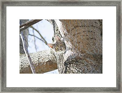 Peaking Cat Framed Print