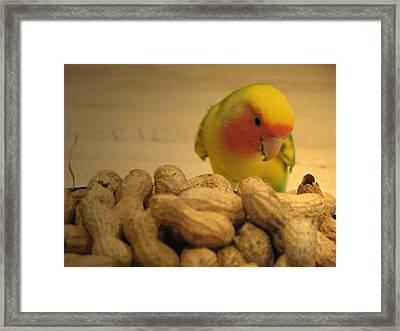 Peanut  Framed Print