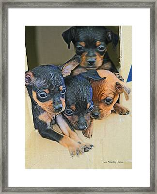 Peanuts Puppies 4 Of 5 Framed Print by Tom Janca