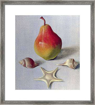 Pear And Shells Framed Print