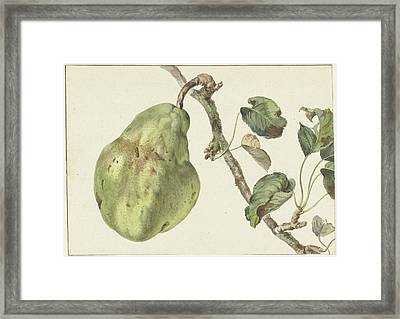 Pear On A Branch, Pieter Gevers Framed Print