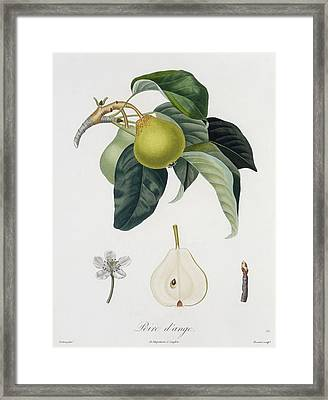 Pear Framed Print by Pierre Antoine Poiteau