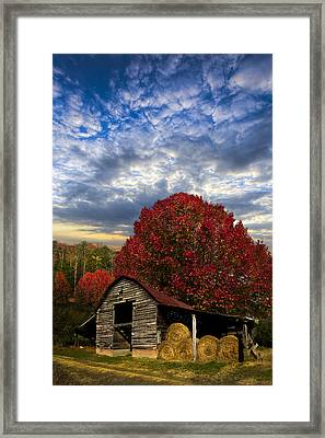 Pear Trees On The Farm Framed Print by Debra and Dave Vanderlaan
