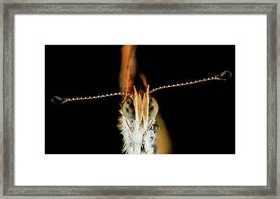 Pearl Crescent Butterfly Framed Print by Us Geological Survey