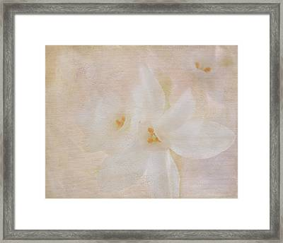 Pearl On Petals Framed Print